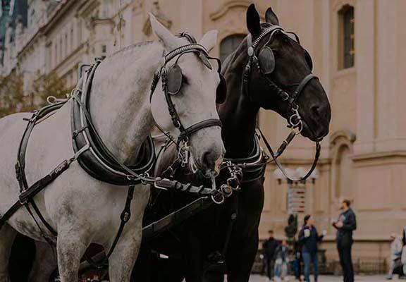 Bryczka do ślubu w Poznaniu, ceny, opinie