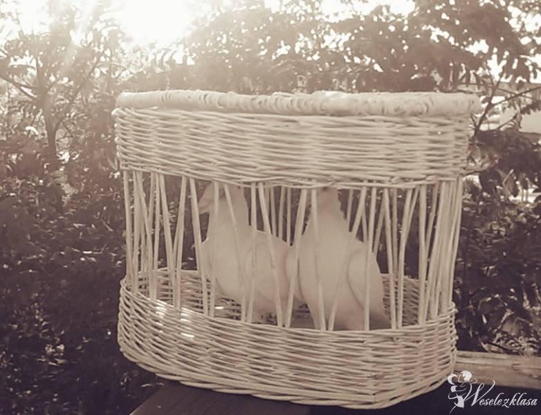 Białe  gołebie na ślubie, Gdańsk - zdjęcie 1