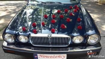 Ekskluzywny Jaguar XJ12 do wynajęcia, Samochód, auto do ślubu, limuzyna Żmigród