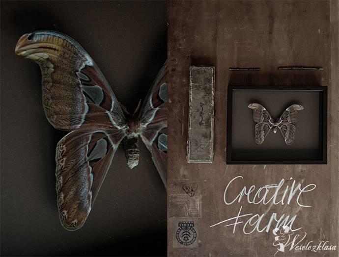 Prezent dla Rodziców Dekoracje Prawdziwe Motyle, Smardzów - zdjęcie 1