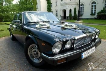 JAGUAR SERIA III V12 ZABYTKOWY Z 1983 ROKU, Samochód, auto do ślubu, limuzyna Lwówek
