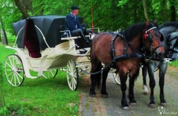 Bryczka, powóz konny do ślubu, Bryczka do ślubu Łuków