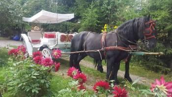 Białą dorożką z czarnymi końmi do ślubu, Bryczka do ślubu Szczuczyn