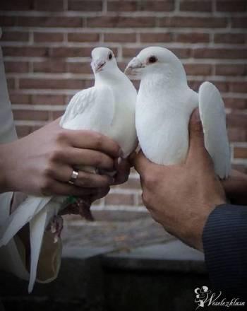 Białe gołębie, magiczne lustro, napisy, balony z helem, bańki mydlane, Unikatowe atrakcje Ozorków