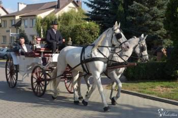 Biały powóz, Bryczka do ślubu Marki