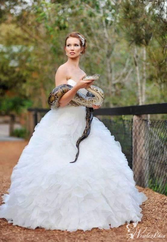 Zwierzęta egzotyczne do niesamowitych ślubnych ujęć, Kraków - zdjęcie 1
