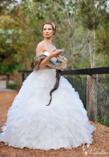 Zwierzęta egzotyczne do niesamowitych ślubnych ujęć, Unikatowe atrakcje Olkusz