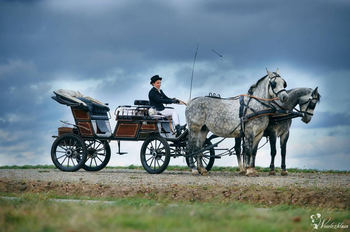 Bryczką do ślubu / wynajem koni do  sesji ślubnej, Rzeszów - zdjęcie 1