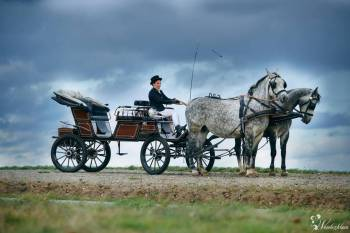Bryczką do ślubu / wynajem koni do  sesji ślubnej, Bryczka do ślubu Łańcut