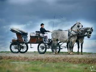 Bryczką do ślubu / wynajem koni do  sesji ślubnej,  Rzeszów