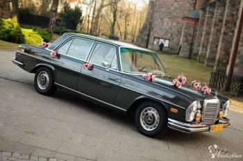 Auto do ślubu,Zabytek RETRO,SAMOCHÓD DO ŚLUBU,MERCEDES  BIAŁY I GRAFIT, Samochód, auto do ślubu, limuzyna Poddębice