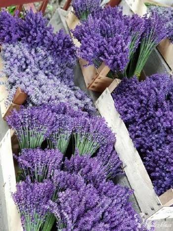 Lavendel Natur Haus, Kwiaciarnia, bukiety ślubne Lublin