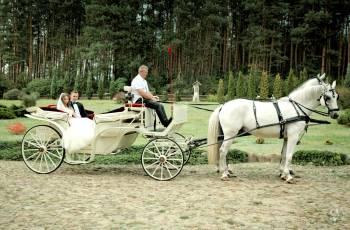 Bryczką do ślubu, Bryczka do ślubu Siedlce