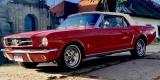 Ford Mustang Cabrio 1965r oraz 1967r & Coupe 1966 r & Fastback 1967r, Bochnia - zdjęcie 3