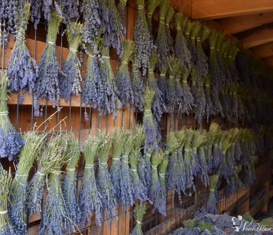 Bukiety oraz produkty lawendowe z plantacji lawendy (ślub, lawenda), Lednogóra - zdjęcie 1