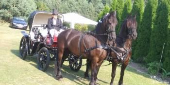 Bryczką do ślubu z końmi fryzyjskimi, Bryczka do ślubu Gierzwałd