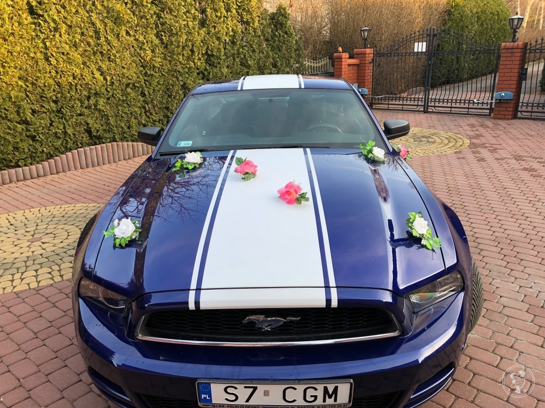 Mustangiem do Ślubu - Ford Mustang Deep Impact Blue - 3.7 V6 2014r., Częstochowa - zdjęcie 1