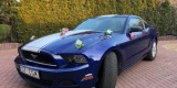 Mustangiem do Ślubu - Ford Mustang Deep Impact Blue - 3.7 V6 2014r., Częstochowa - zdjęcie 2
