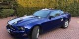 Mustangiem do Ślubu - Ford Mustang Deep Impact Blue - 3.7 V6 2014r., Częstochowa - zdjęcie 3