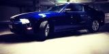 Mustangiem do Ślubu - Ford Mustang Deep Impact Blue - 3.7 V6 2014r., Częstochowa - zdjęcie 5