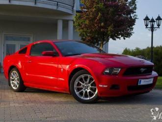 Mustangiem do ślubu Ford Mustang,  Gdynia
