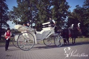 Bryczką do ślubu !! Dorożka, Bryczka do ślubu Legnica