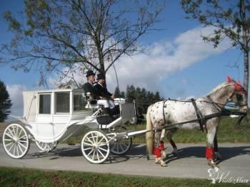 Bryczką do ślubu  powozem,imprezy okolicznościowe, Bryczka do ślubu Nowy Sącz
