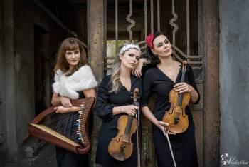 JOPEK Trio_skrzypce i harfa celtycka, Oprawa muzyczna ślubu Węgrów