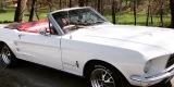 Ford Mustang Cabrio 1965r oraz 1967r & Coupe 1966 r & Fastback 1967r, Bochnia - zdjęcie 6
