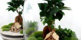 MikroKlimat - Las w słoiku. Podziękowania dla rodziców + GRATIS., Królówka - zdjęcie 5