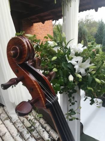 Kwartet Smyczkowy na ślub - Kwartet Smyczkowy Boccherini, Oprawa muzyczna ślubu Szprotawa