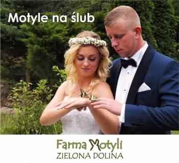 Farma Motyli Zielona Dolina - motyle do ślubu, Unikatowe atrakcje Gdańsk