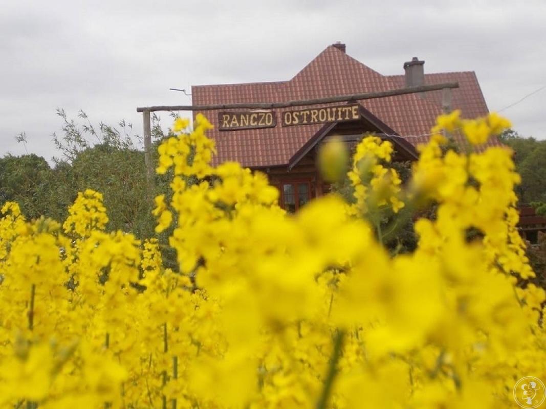 Ranczo Ostrowite - Gospodarstwo Agroturystyczne, Świecie - zdjęcie 1