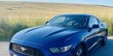 Najlepsze Auto o Ślubu ♥️👰🏼🤵🏼Piękne brzmienie   Ford Mustang, Bydgoszcz - zdjęcie 2