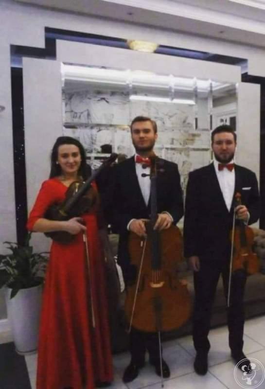 Oprawa muzyczna, trio virtuosi skrzypce altówka wiolonczela, Bydgoszcz - zdjęcie 1