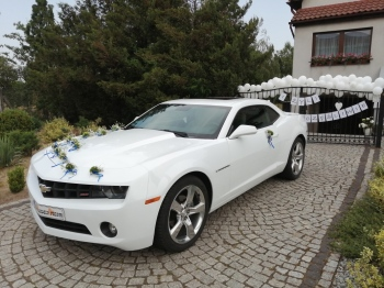 Auto do Ślubu CAMARO biała PERŁA Wesele Ślub Mercedes Golf I CABRIOLET, Samochód, auto do ślubu, limuzyna Zielona Góra