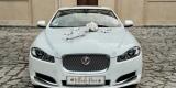 Samochód Auto do ślubu, na wesele Jaguar XF, Leszno - zdjęcie 3