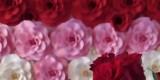 White Rose - dekoracje ślubne, kompleksowa oprawa florystyczna, Bydgoszcz - zdjęcie 5