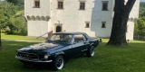 Ford Mustang Klasyk do Ślubu 1967, Gorlice - zdjęcie 6