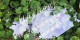 wypozyczalnia-weselna wysyłkowa wypożyczalnia dekoracji, neony, Augustów - zdjęcie 5