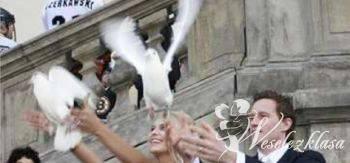 Białe Gołębie na ślub, Unikatowe atrakcje Marki