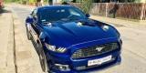 Najlepsze Auto o Ślubu ♥️👰🏼🤵🏼Piękne brzmienie   Ford Mustang, Bydgoszcz - zdjęcie 5