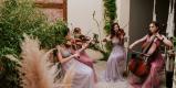 Manufaktura Muzyki -skrzypce,śpiew,kwartet smyczkowy,harfa,flet,organy, Łódź - zdjęcie 1