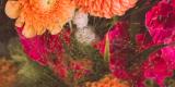 Dekoratornia - Zakochani w naturze, Tychy - zdjęcie 3
