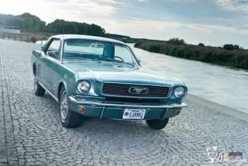 Mustang 1966, Samochód, auto do ślubu, limuzyna Kępno